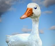 Contractors are the Goose