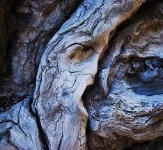 Not Dead Wood Contractor