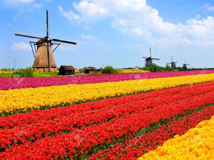Working in the Netherlands